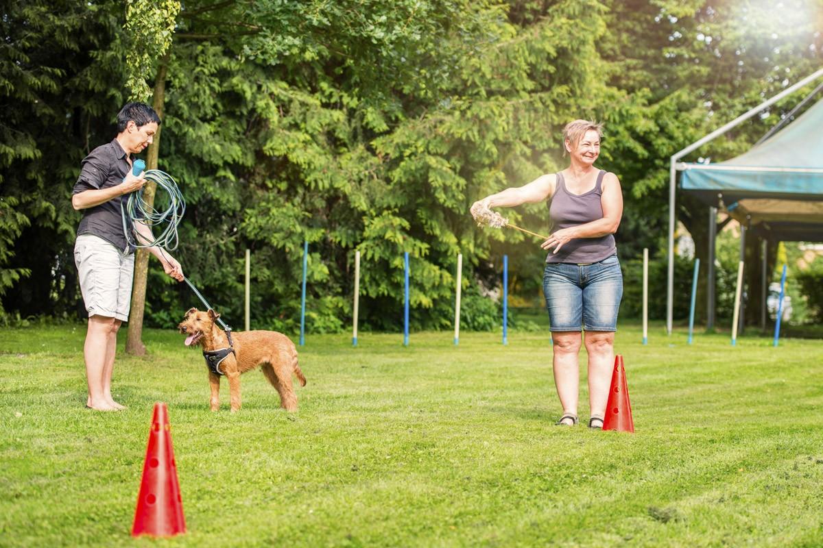 Tricks & Clicker - Natürlich Hund - Hundeschule in Rinteln und Neustadt