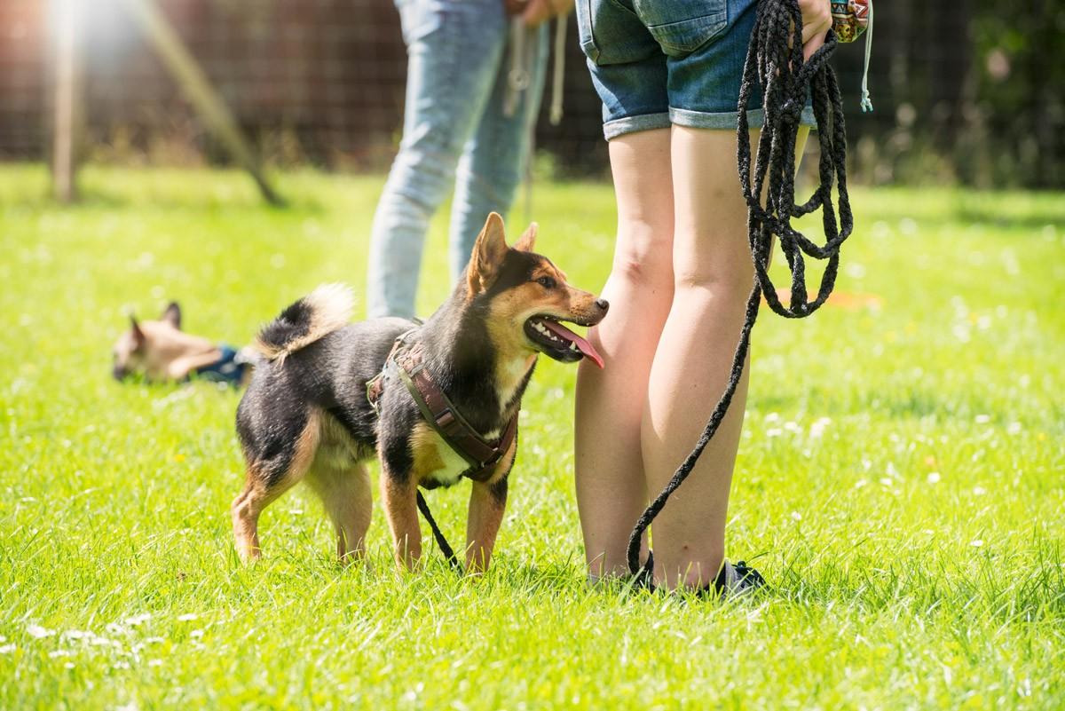 Leinenführigkeit - Natürlich Hund - Hundeschule in Rinteln und Neustadt