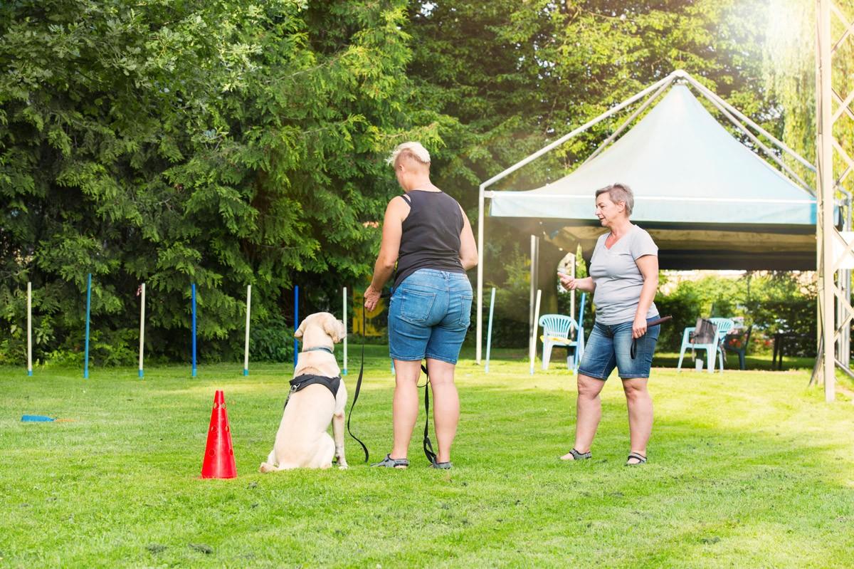 Giftköder-Prävention - Natürlich Hund - Hundeschule in Rinteln und Neustadt