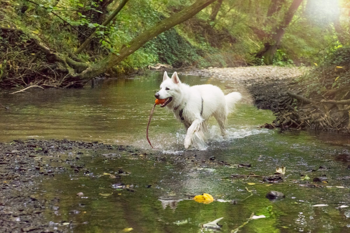 Freilauf - Natürlich Hund - Hundeschule in Rinteln und Neustadt